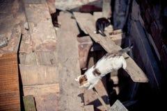 Gatos en las ruinas de hogares foto de archivo