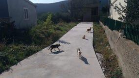 Gatos en los Ist de la isla foto de archivo
