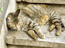 Gatos en Roma Fotografía de archivo