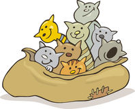Gatos en saco Fotos de archivo libres de regalías