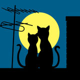 Gatos en un tejado de la noche Fotografía de archivo