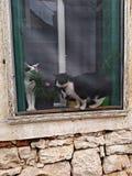 Gatos en un travesaño de la ventana foto de archivo
