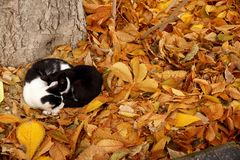 Gatos en una alfombra de las hojas de otoño Imagenes de archivo