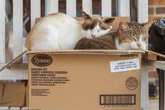 Gatos en una caja imagenes de archivo