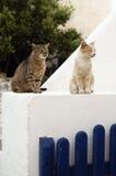 Gatos en una chimenea Foto de archivo libre de regalías