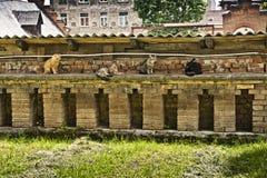 Gatos en una pared Imagenes de archivo