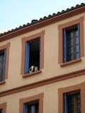 Gatos en una ventana Foto de archivo libre de regalías