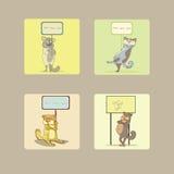 Gatos engraçados Foto de Stock