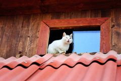 Gatos engraçados Fotos de Stock Royalty Free