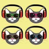 Gatos engraçados em fones de ouvido e em óculos de sol da música Fotografia de Stock Royalty Free