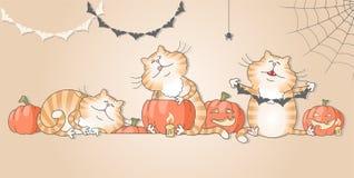 Gatos engraçados que preparam decorações para o Dia das Bruxas Fotos de Stock Royalty Free