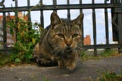 Gatos enojados Imagen de archivo libre de regalías
