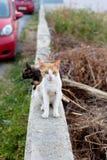 Gatos exteriores Imagens de Stock Royalty Free