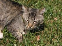 Gatos, gato, mi gato Imágenes de archivo libres de regalías