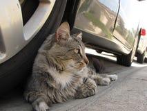 Gatos, gato, mi gato Fotografía de archivo