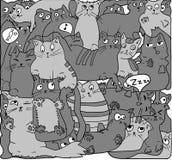 Gatos grises en negro Imágenes de archivo libres de regalías
