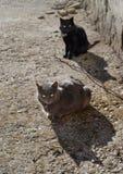 Gatos grises y negros Imagen de archivo