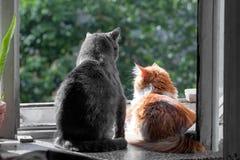 Gatos grises y rojos en ventana Foto de archivo