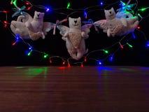 Gatos hechos a mano de la juguete-guirnalda con una guirnalda del ` s del Año Nuevo Imagenes de archivo
