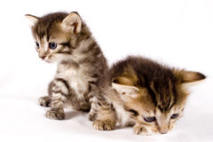 Gatos lindos Imagen de archivo
