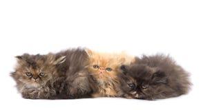 Gatos lindos Imagen de archivo libre de regalías