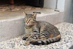 Gatos lindos Fotografía de archivo libre de regalías