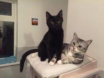 Gatos lindos Foto de archivo libre de regalías