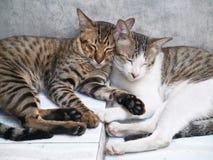 Gatos lindos de los pares que duermen junto fondo concreto gris Foto de archivo libre de regalías