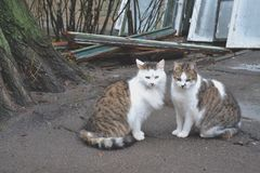 Gatos lindos en amor Gatos de la calle Gatos divertidos en la calle Imágenes de archivo libres de regalías