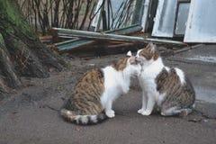 Gatos lindos en amor Gatos de la calle Gatos divertidos en la calle Imagen de archivo libre de regalías