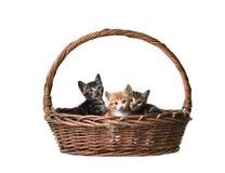 Gatos lindos en la cesta Foto de archivo libre de regalías