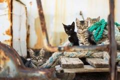 Gatos lindos en la plataforma de madera vieja y cuerdas gastadas de la marina de guerra Fotos de archivo libres de regalías