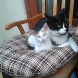 Gatos lindos felices Fotografía de archivo libre de regalías