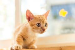 Gatos lindos, gatos hermosos Foto de archivo