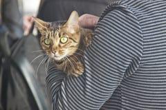 Gatos lindos y hermosos Fotos de archivo libres de regalías