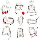 gatos Modelo Imagen de archivo
