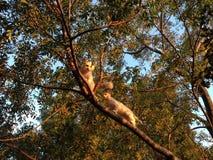 Gatos na árvore Foto de Stock