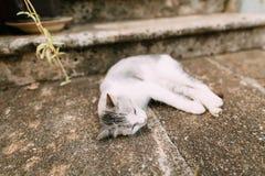 Gatos na cidade velha de Budva, Kotor, Dubrovnik Croácia e segunda-feira Imagem de Stock Royalty Free