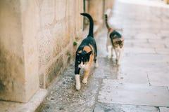 Gatos na cidade velha de Budva, Kotor, Dubrovnik Croácia e segunda-feira Imagens de Stock Royalty Free