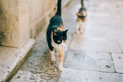 Gatos na cidade velha de Budva, Kotor, Dubrovnik Croácia e segunda-feira Fotografia de Stock Royalty Free