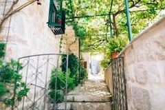 Gatos na cidade velha de Budva, Kotor, Dubrovnik Croácia e segunda-feira Imagens de Stock