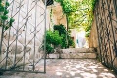 Gatos na cidade velha de Budva, Kotor, Dubrovnik Croácia e segunda-feira Fotos de Stock Royalty Free