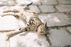 Gatos na cidade velha de Budva, Kotor, Dubrovnik Croácia e segunda-feira Fotografia de Stock