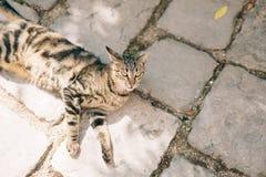 Gatos na cidade velha de Budva, Kotor, Dubrovnik Croácia e segunda-feira Foto de Stock