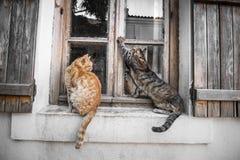 Gatos na janela Fotografia de Stock Royalty Free