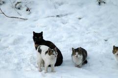 Gatos na neve 2 Foto de Stock