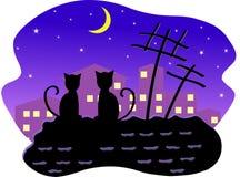 Gatos na noite Fotografia de Stock