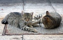 Gatos na rua Fotografia de Stock