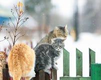 Gatos na vila na primavera que senta-se na cerca de madeira Imagem de Stock Royalty Free