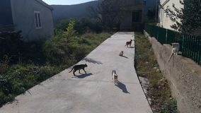 Gatos nas ISTs da ilha foto de stock
